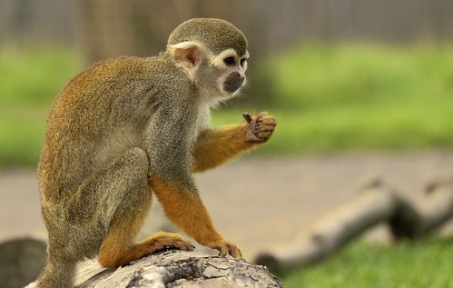Image of Monkeys