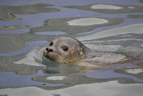 Image of Seals