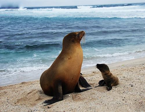 Image of Sea Lions