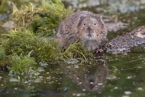Image of Water Rats