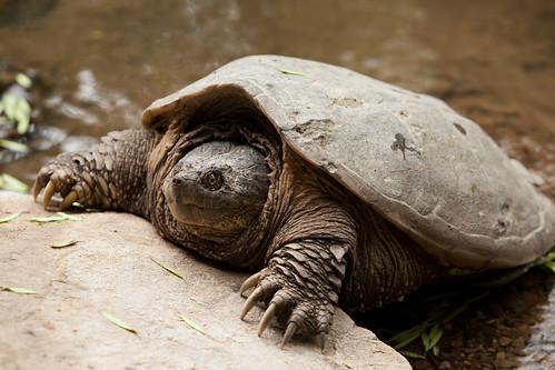 Image of Tortoises