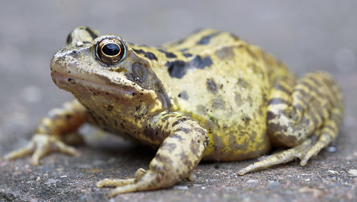 Image of Toads