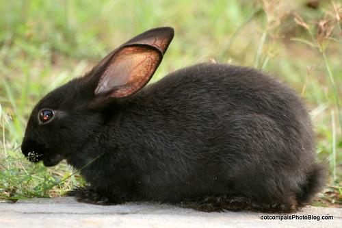 Image of Rabbits