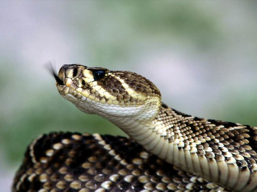 Image of Snakes